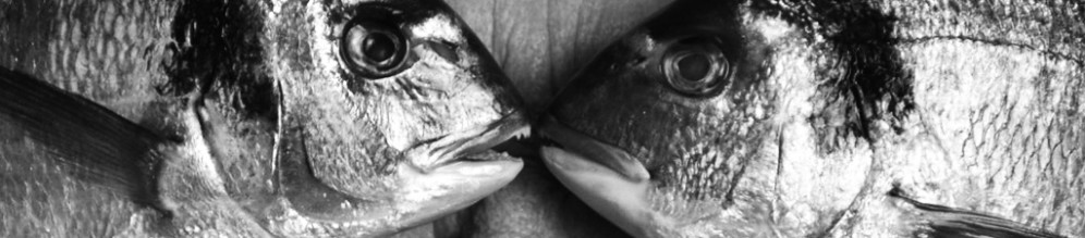 hl-topstrip-fisheyes